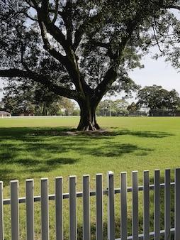 Colpo verticale di un singolo albero che cresce nel campo isolato con un recinto