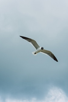 Colpo verticale di un uccello in volo nel cielo