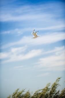 Colpo verticale di un volo del gabbiano metà con un cielo nuvoloso blu nei precedenti al giorno
