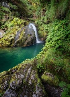 Colpo verticale di una bellissima laguna circondata da rocce muschiose e la foresta di skrad, croazia