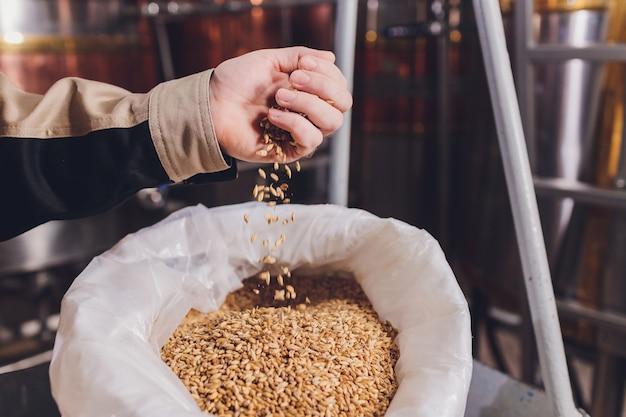 Colse in su della mano di un contadino che tiene semi di soia. un prodotto biologico sano.