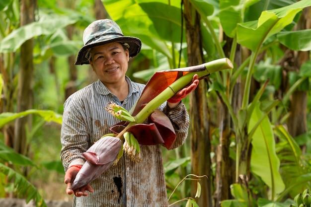 Coltivatore asiatico della donna che porta cavolo di banana in azienda agricola. concetto di agricoltura.