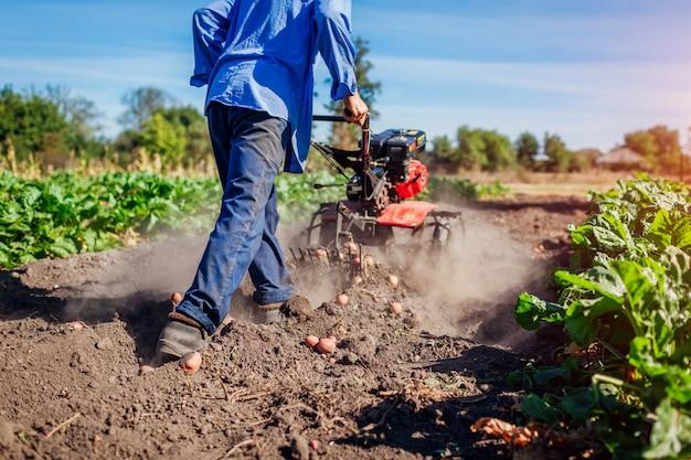 Coltivatore che guida un piccolo trattore per la coltivazione del suolo e lo scavo di patate. raccolto di patate raccolto autunnale