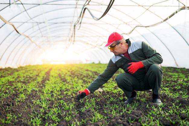 Coltivatore senior che controlla stato delle piante giovani nella serra.