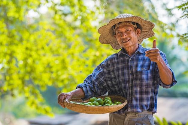Coltivatore senior dell'uomo asiatico con verde limone, agricoltore asiatico dell'uomo sullo spazio vuoto della copia