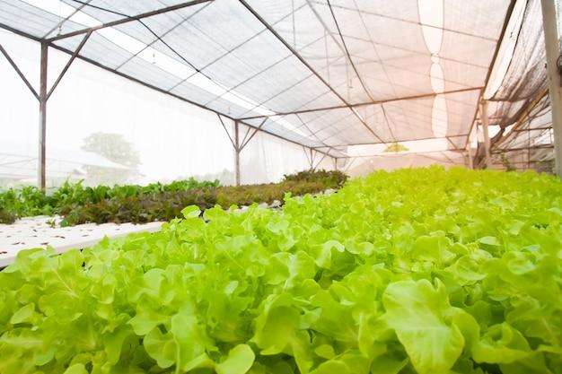 Coltura di coltura idroponica in tubo di coltura idroponica. agricoltura moderna