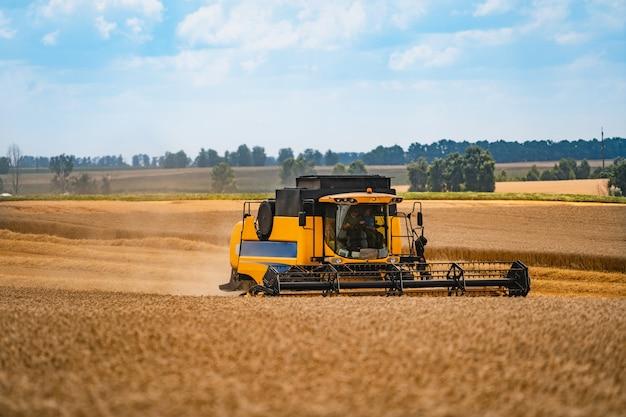 Combina la raccolta del grano. attrezzature per la raccolta del grano nel campo. tempo di raccolta