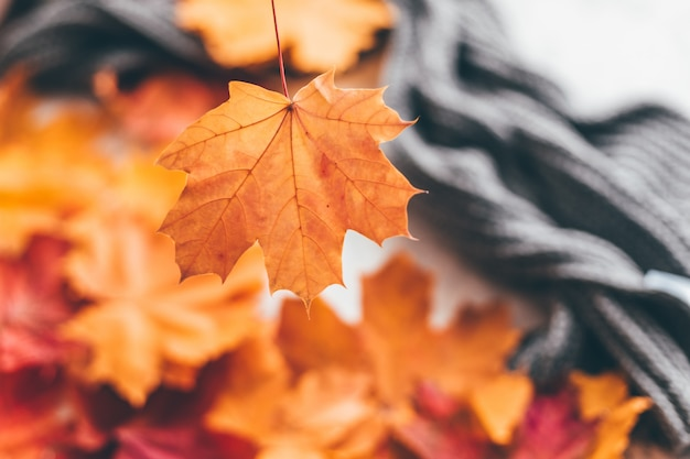 Composizione accogliente casa autunnale con foglie di acero.selective soft focus