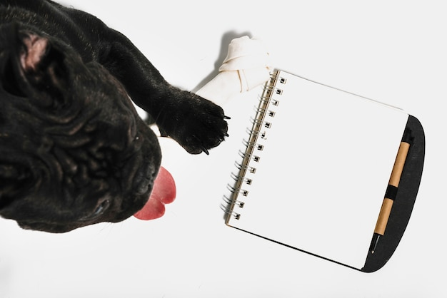 Composizione adorabile del bulldog con il taccuino