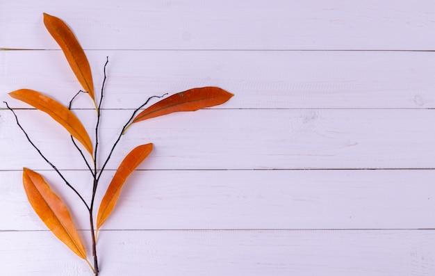 Composizione autunnale con foglie
