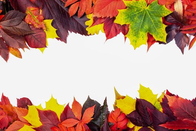 Composizione autunnale, cornice di foglie colorate autunnali impostate