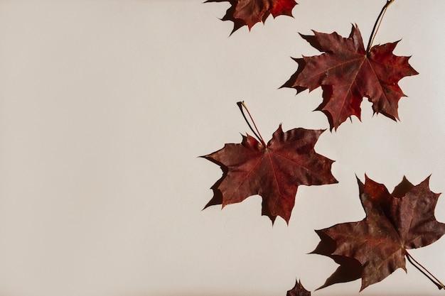 Composizione autunnale di foglie su fondo beige, acero, quercia, cotone, arancia essiccata, coni