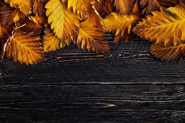 Composizione autunnale di foglie su legno scuro.