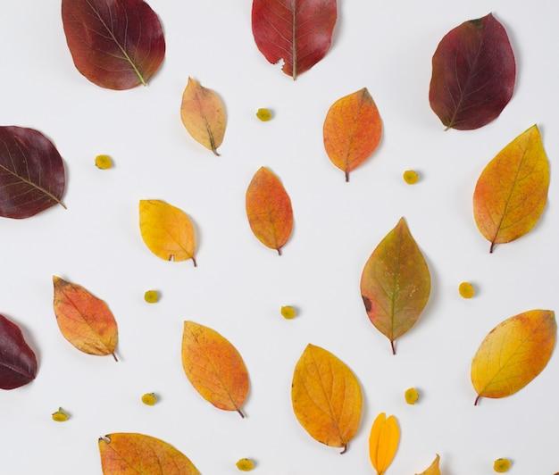 Composizione autunnale di vibrante foglie rosse e gialle su uno sfondo bianco.