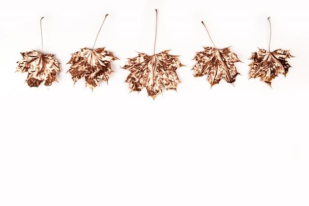 Composizione autunnale. foglie di acero dorate su bianco.