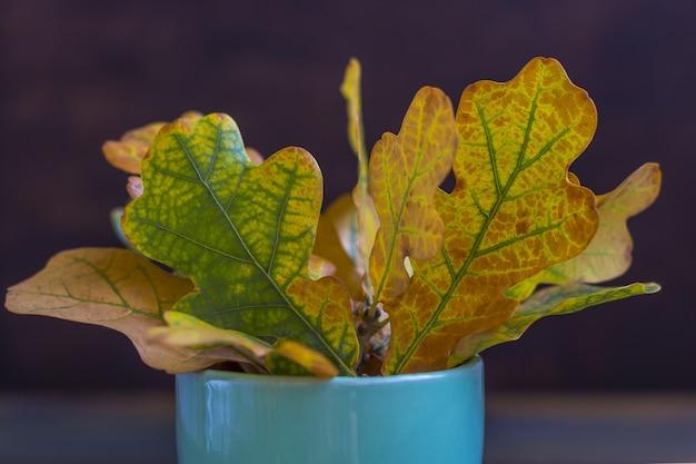 Composizione autunnale. quercia variopinta delle foglie asciutte in una tazza