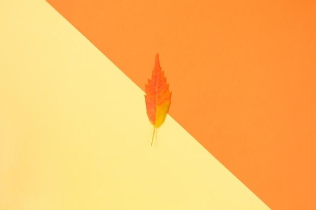 Composizione autunnale. sfondo colorato foglia d'autunno giallo.