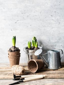 Composizione con giacinti in secchio di zinco e attrezzi da giardino sul tavolo di legno rustico.