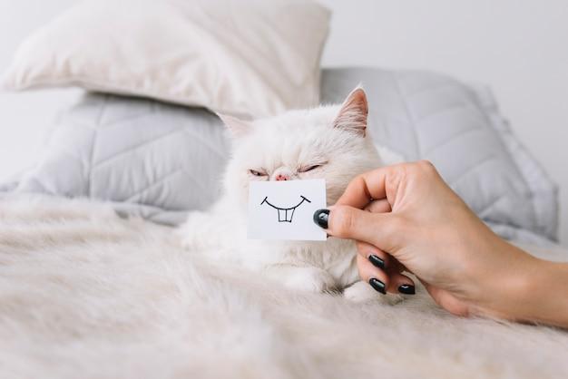 Composizione di animali domestici adorabili con gatto bianco assonnato