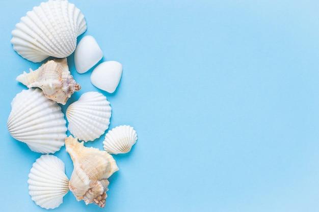 Composizione di conchiglie di mare esotico. concetto di estate flat lay. vista dall'alto copyspace
