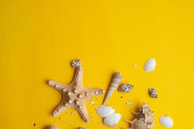 Composizione di conchiglie di mare esotico. concetto di estate vista dall'alto