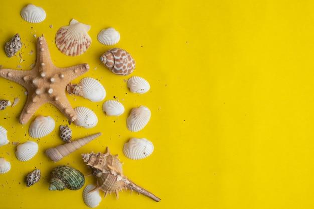 Composizione di conchiglie di mare esotico su uno sfondo giallo. concetto di estate vista dall'alto