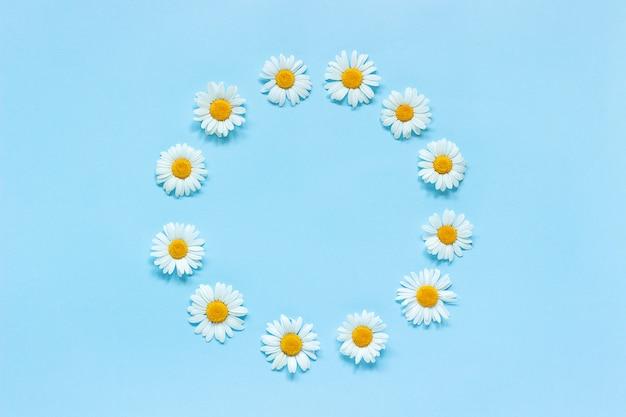 Composizione di fiori cornice rotonda floreale corona di fiori di camomilla su sfondo blu