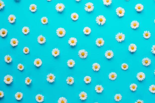 Composizione di fiori fiori di camomilla su blu pastello