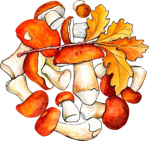 Composizione di funghi di bosco su bianco