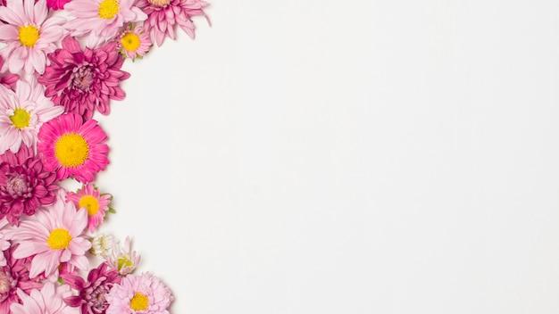 Composizione di meravigliose fioriture di rose