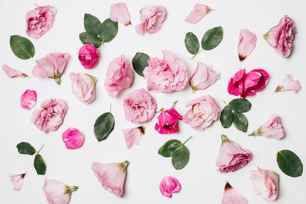 Composizione di meravigliosi fiori di rosa e fogliame verde