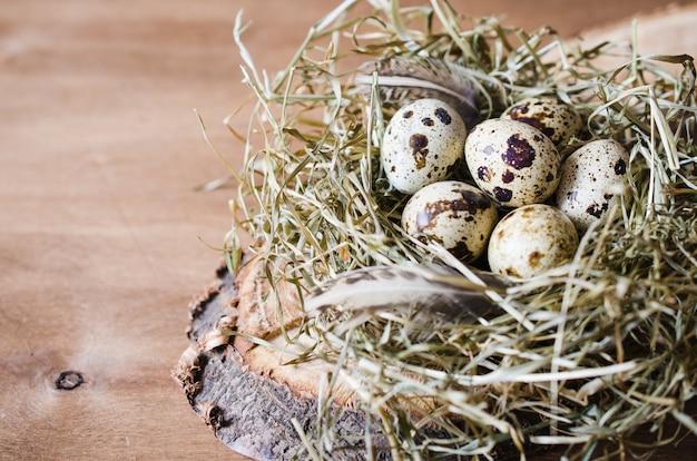 Composizione di pasqua di uova di quaglia nel nido.