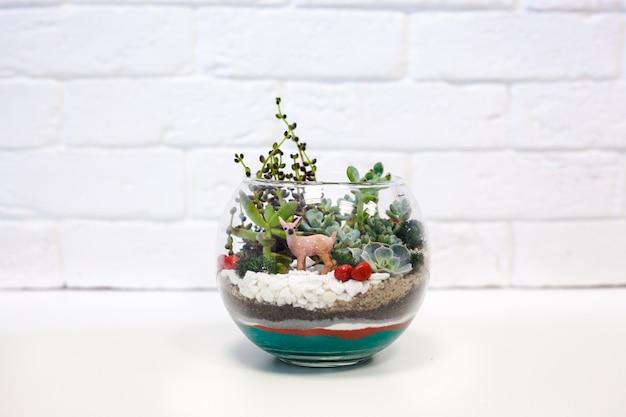 Composizione di piante grasse, pietra, sabbia e vetro