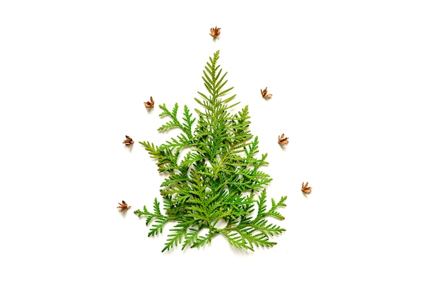 Composizione di ramoscelli di thuja e piccoli coni a forma di un albero di natale, isolato su uno sfondo bianco.