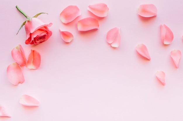 Composizione di rosa rosa e petali con spazio nel mezzo