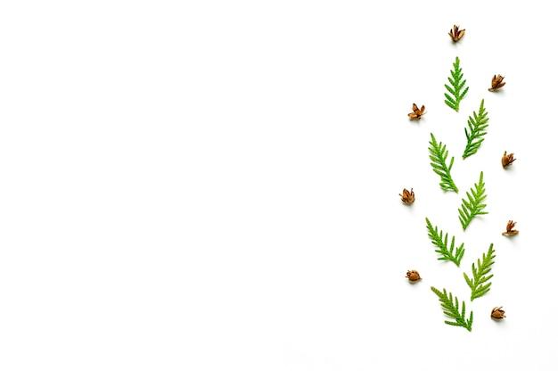 Composizione di un ramoscello di thuja e piccoli coni isolati su uno sfondo bianco.