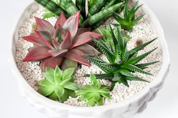 Composizione di varietà di piante grasse