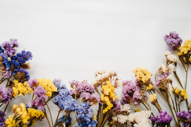Composizione fiori colorati essiccati su superficie bianca