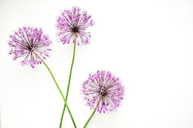Composizione floreale. cornice di fiori lilla su uno sfondo bianco.