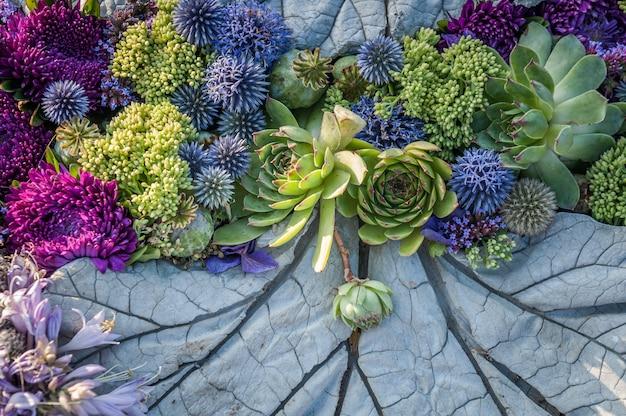 Composizione floreale di aster viola e piante grasse
