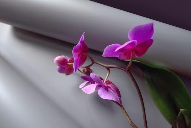 Composizione geometrica con orchidea rosa su grigio