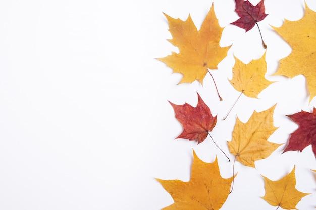 Composizione in autunno foglie di autunno asciutte su bianco