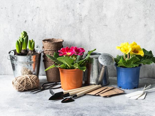 Composizione nel giardino con i fiori della molla - giacinti, primaverina e strumenti di giardino su una tavola grigia.