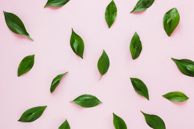 Composizione simmetrica piatta laici di foglie