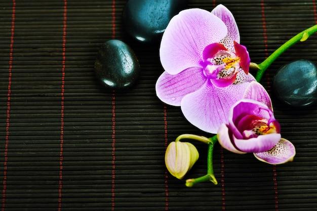 Composizione spa orchid