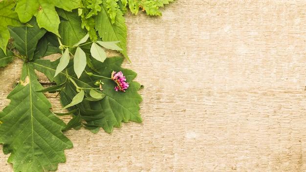 Composizione verde con foglie su legno
