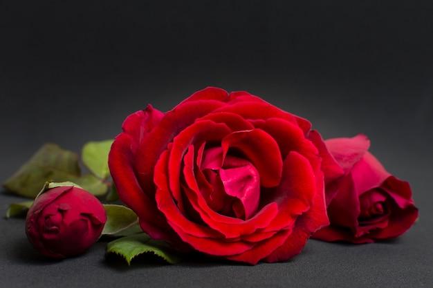 Concetto artistico della rosa rossa del primo piano