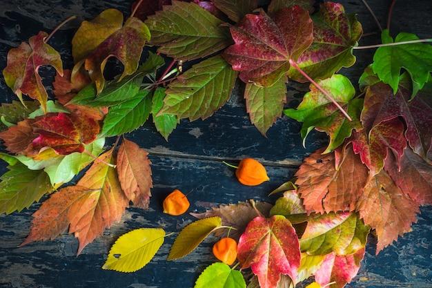 Concetto autunnale con foglie rosso brillante