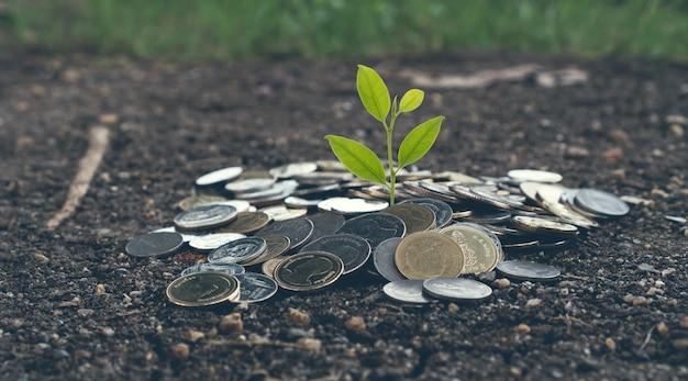 Concetto crescente dei soldi, pianta sulle monete del mucchio sulla terra. tono vintage