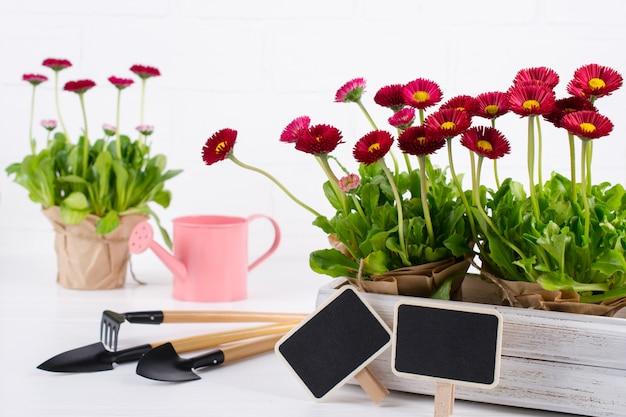 Concetto degli impianti del giardino della primavera. strumenti di giardinaggio, fiori in vasi e annaffiatoio sulla tavola bianca.